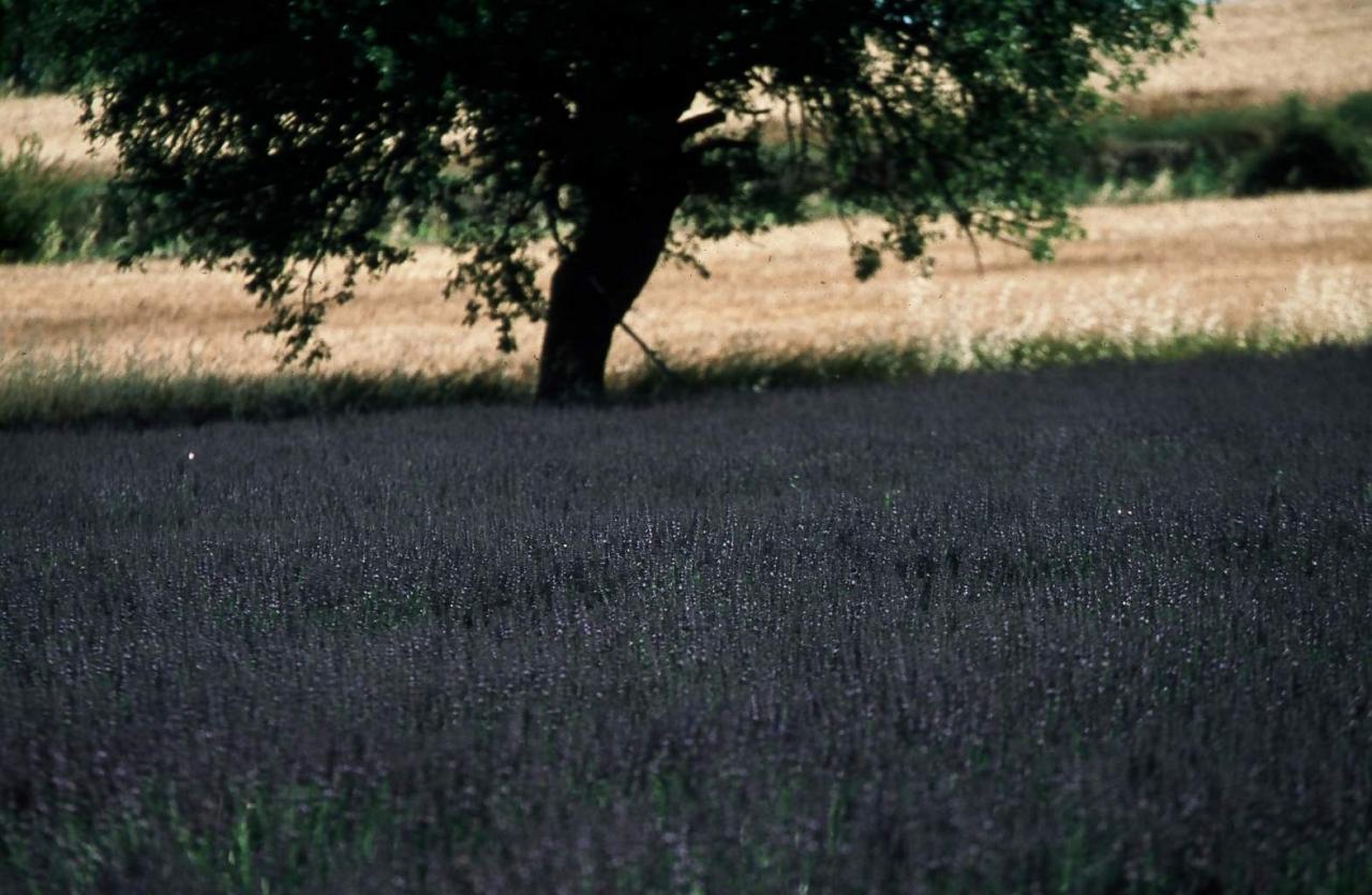 Nature en Luberon