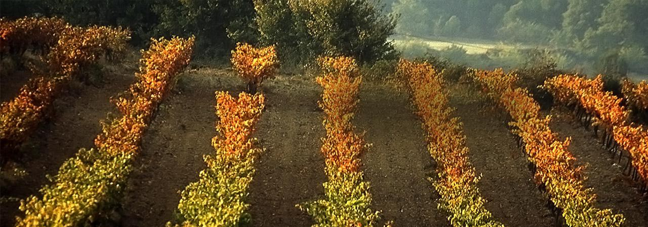 Over the vines, the true nature of the Luberon